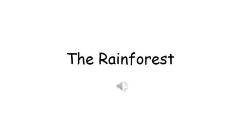 Thumbnail for entry The Rainforest