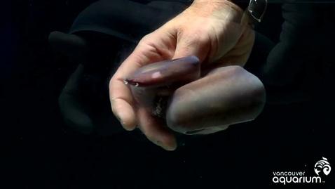Thumbnail for entry Vancouver Aquarium Hagfish Slime