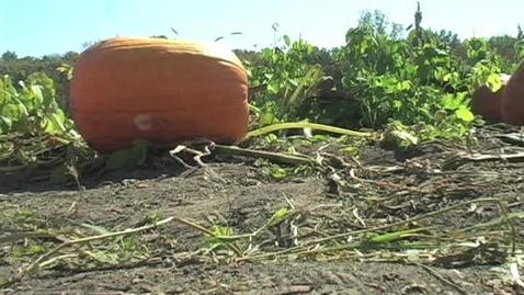 Thumbnail for entry Kayla Vogt and Jaxon Nagel - Stuckmeyers Farm Market