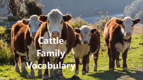Thumbnail for entry cattle terminology
