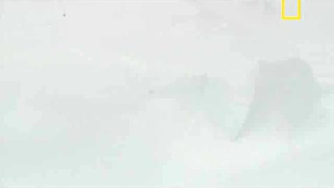 Thumbnail for entry White
