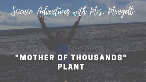 "Thumbnail for entry ""Mother of Thousands"" Plant - Quiz"