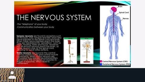 Thumbnail for entry Rec - 18 May Nervous System + Brain and its Parts