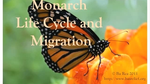Thumbnail for entry Monarch Life Cycle and Migration 2011