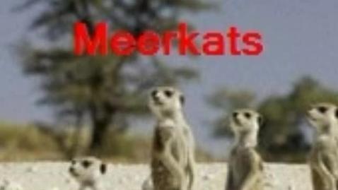 Thumbnail for entry Meerkats of the Kalahari Desert