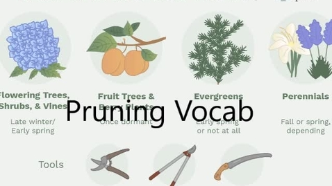 Thumbnail for entry pruning vocab