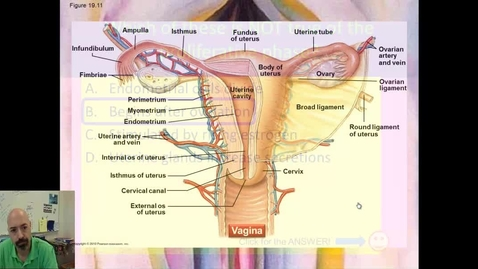 Thumbnail for entry Reproductive System part 6 - Female Genitalia and Hormones