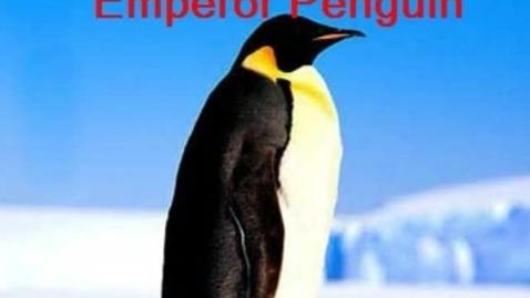 Thumbnail for entry Penguins