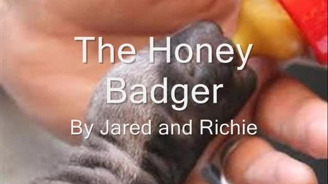 Thumbnail for entry The Honey Badger By: Jared & Richie