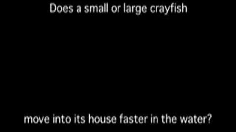 Thumbnail for entry Schumacher Crayfish N LiC La