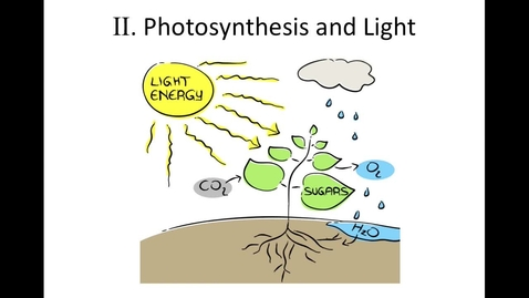 """Thumbnail for entry Unit 10, Section 2 """"Photosynthesis and Light"""""""