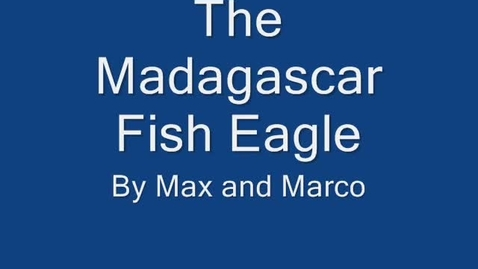 Thumbnail for entry Madagascar Fish Eagle By: Max and Marco