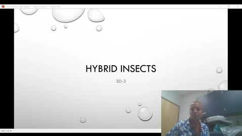 Thumbnail for entry Hybrid Insects video presentation.webm