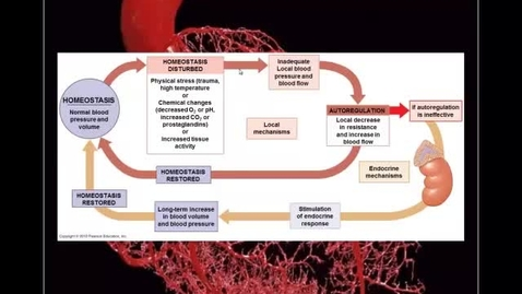 Thumbnail for entry Blood Vessels pt 5 - Endocrine Regulation