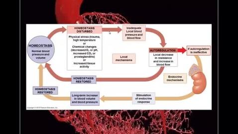 Thumbnail for entry Blood Vessels pt 5 - Endocrine Regulation