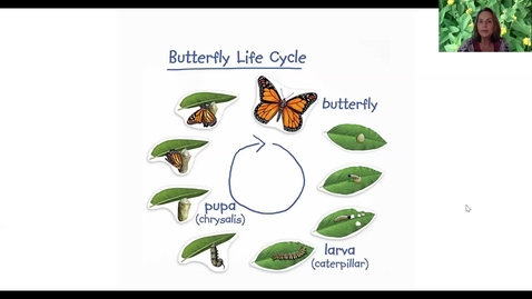 Thumbnail for entry Painted Lady Life Cycle Week 1