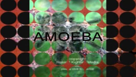 Thumbnail for entry Amoeba