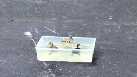Thumbnail for entry South Newton Kindergarten Ducks