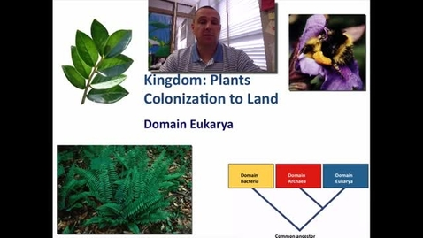 Thumbnail for entry Plants - Colonization to land