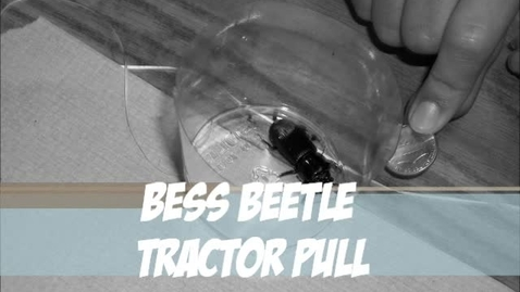 Thumbnail for entry Bess Beetle Lab 2012