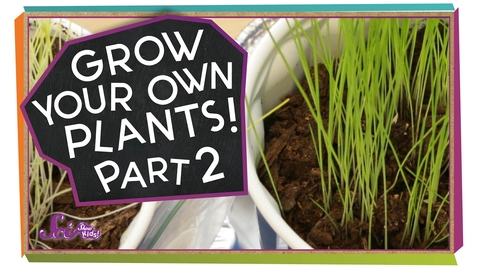 Thumbnail for entry What Happened to Our Plants? | Science Project for Kids