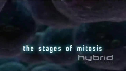 Thumbnail for entry The Stages of Mitosis
