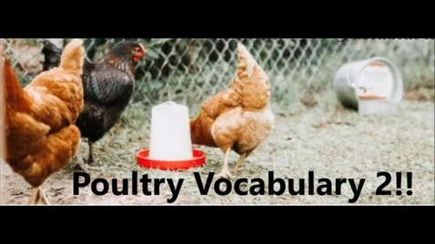 Thumbnail for entry Poultry vocabulary 2