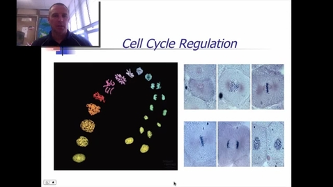 Thumbnail for entry Cell Cycle Regulation