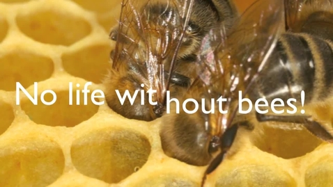 Thumbnail for entry Life Without Bees