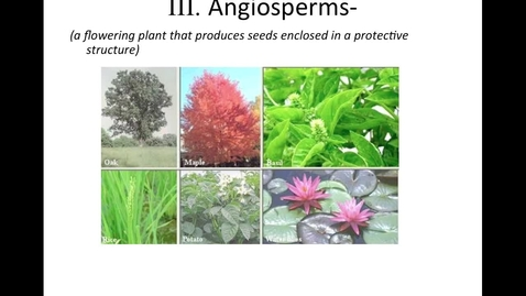 """Thumbnail for entry Unit 11, Section 3 """"Angiosperms"""""""
