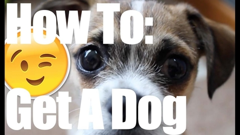 Thumbnail for entry How To Convince Your Parents To Get a Dog