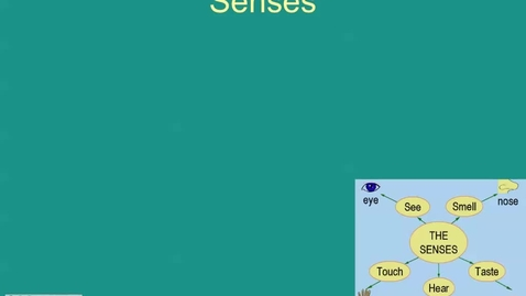 Thumbnail for entry Nervous System: The Senses