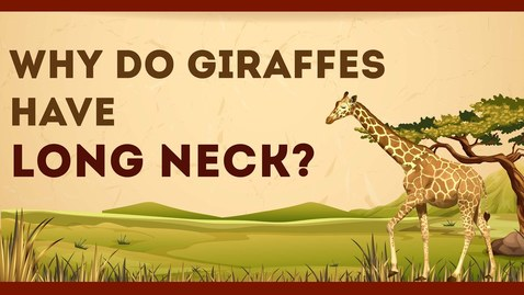 Thumbnail for entry Why do Giraffes have Long Neck? | Science Curiosity | Letstute