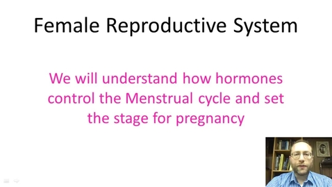 Thumbnail for entry Female Reproductive System