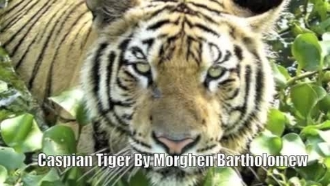 Thumbnail for entry Caspian Tiger - Bartholomew pd 8