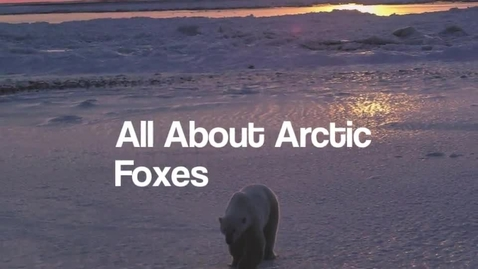 Thumbnail for entry Arctic Fox by Ethan