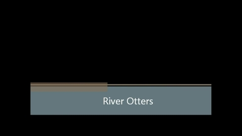 Thumbnail for entry River Otters (Ms. Smith's Class)