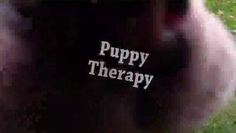 Thumbnail for entry Puppies - WSCN PTV (2015-2016)