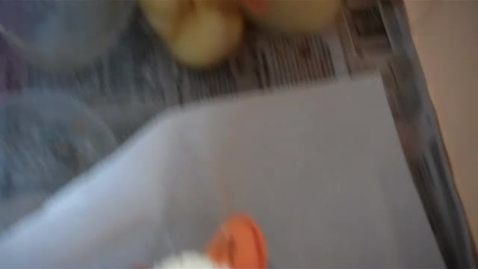 Thumbnail for entry duck sitting