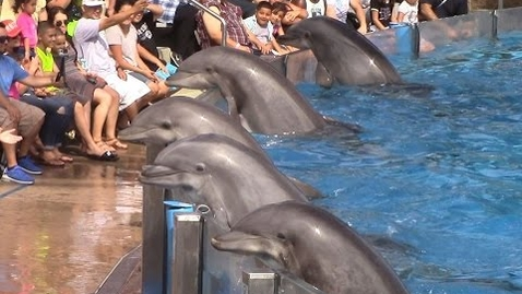 Thumbnail for entry Dolphin Days (Full Show) at SeaWorld San Diego on 8/30/15