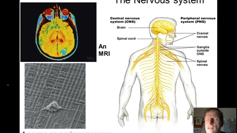 Thumbnail for entry Nervous System Part I