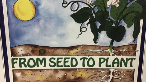 Thumbnail for entry From Seed to Plant