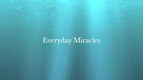 Thumbnail for entry A Collection of Everyday Miracles