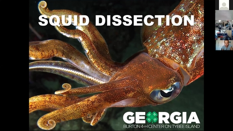 Thumbnail for entry Part1  - Northwood ES Virtual Squid Dissection - Burton 4-H Center 2.24.2021