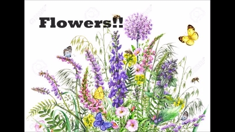 Thumbnail for entry Flower vocabulary.mp4