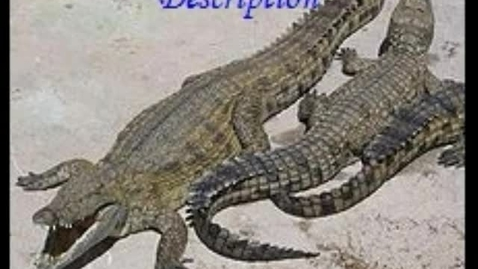 Thumbnail for entry Crocodile