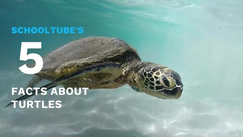 Thumbnail for entry SchoolTube's 5 Facts About Turtles
