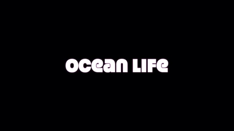 Thumbnail for entry Conway Connection, episode 21, 3/25/19, Ocean Life