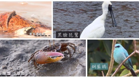 內容項目 香港的動物(一) 的縮圖