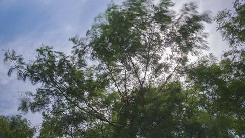 內容項目 樹葉搖動 的縮圖